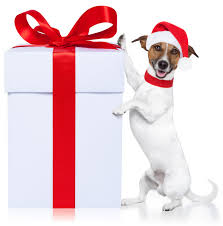 Holiday Gift Guide For People and Pups