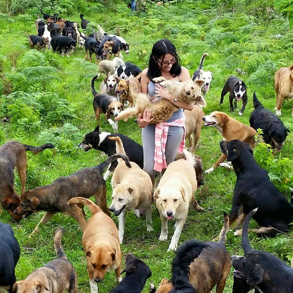 The Costa Rica Sanctuary Where All Your Dog Dreams Come True