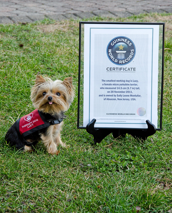 Lucy the world's smallest service dog