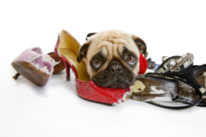 Pancho Explains: Why Dogs Chew Stuff