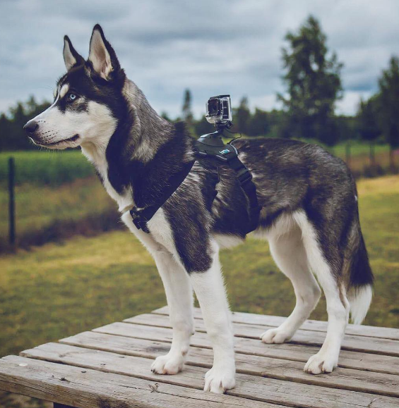 Wearable Tech That Will Keep Your Pup Fit, Safe, and Happy
