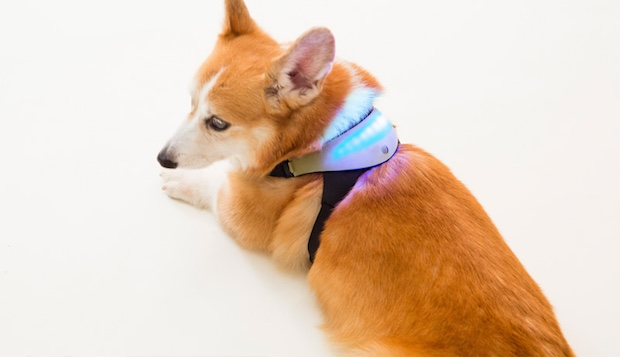 wearable technology for dogs Inupathy