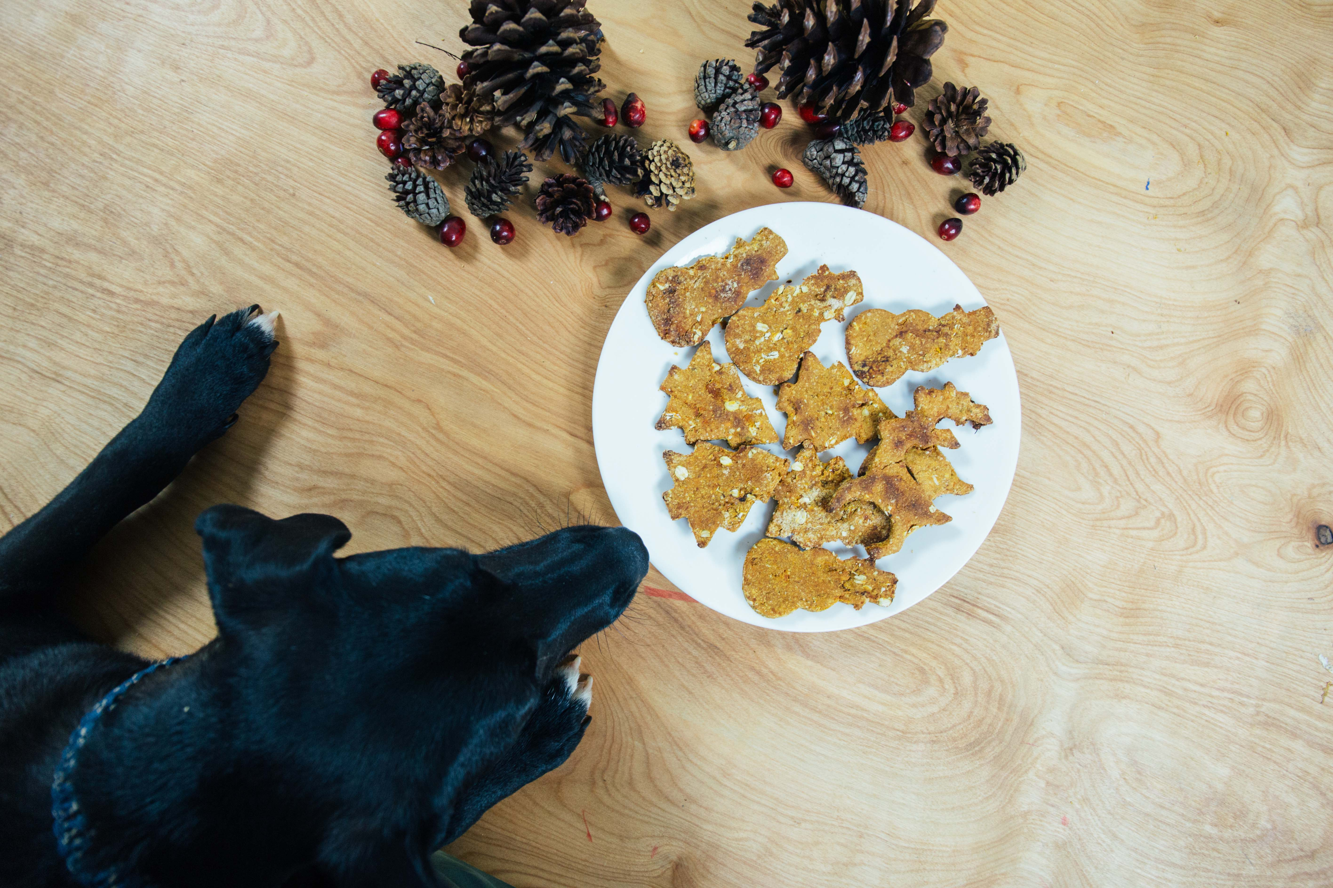 Ollie Knows: How to Make a Healthy Holiday Pup Treat