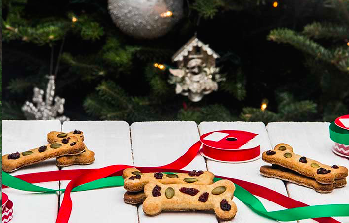 Holiday dog treats, fruit cake