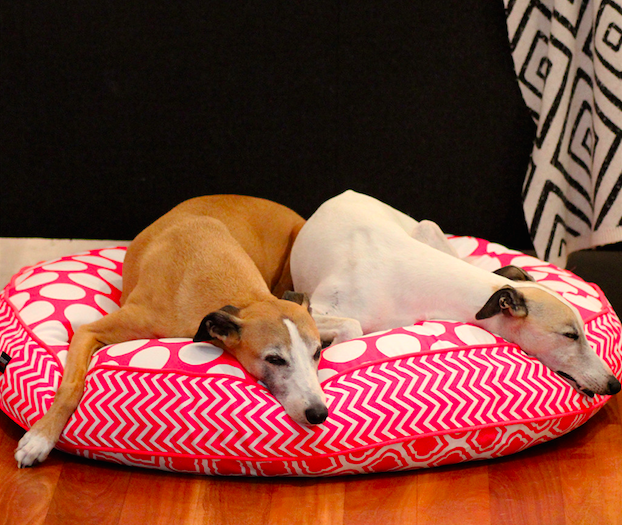 Holiday Gift Guide, Sustainable Dog Bed