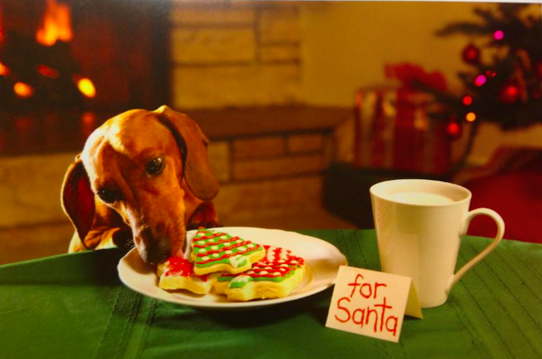 pup holiday cards, eating cookies