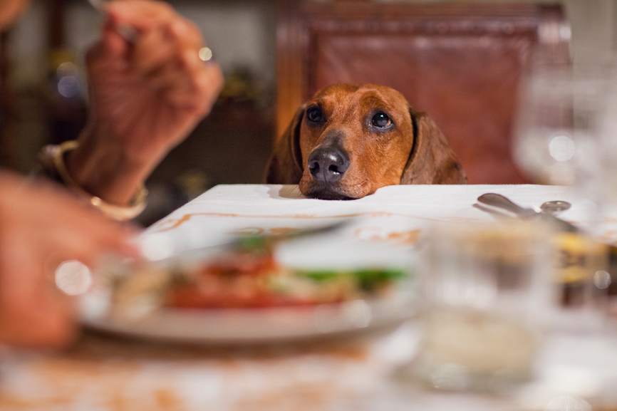 How Many Meals A Day Should A Dog Eat