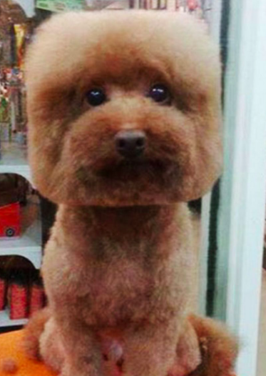 grooming gone wild, dog with square fur