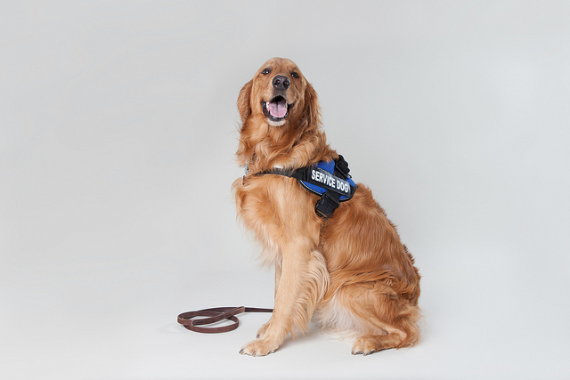 12 Surprising Facts About Service Dogs