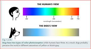dogs and color, color chart for dogs and humans
