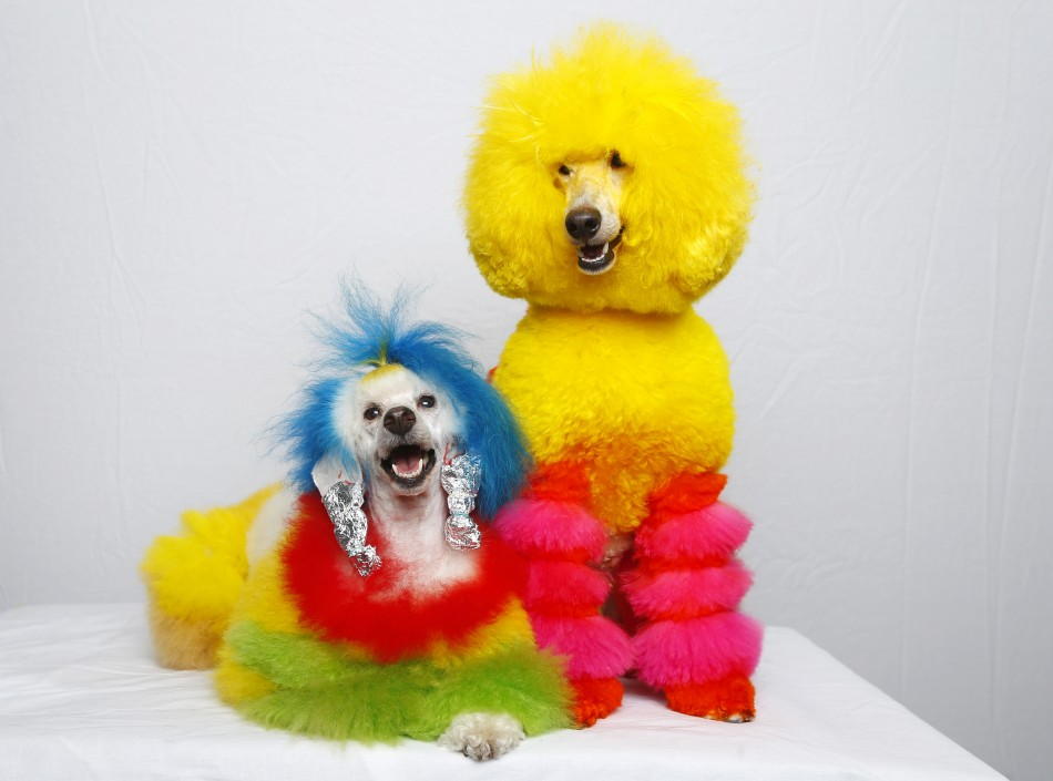 Three Colorful Truths About Your Dog