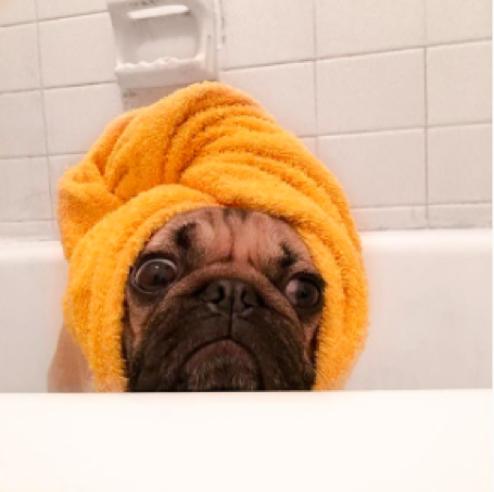 dogs of Instagram, Doug the Pug