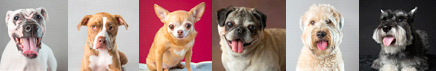 Glamour shots for shelter dogs