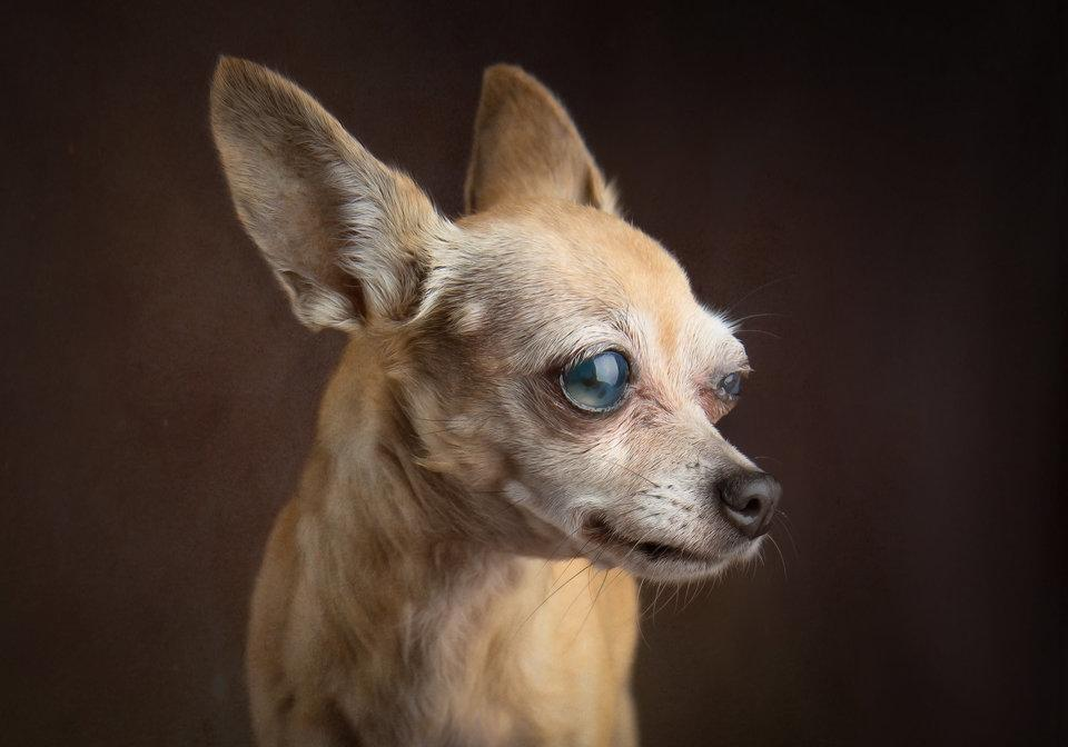 Glamour Shots for Shelter Dogs, Patsy