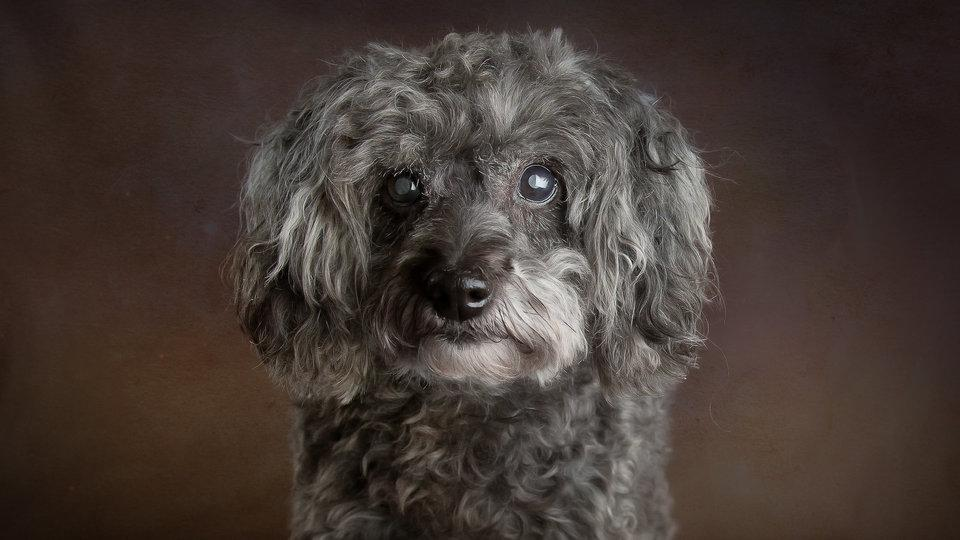 Glamour Shots for Shelter Dogs, Millie