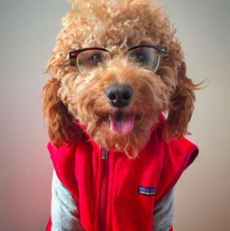 dogs of Instagram, Samson the Dood