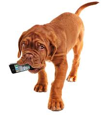 Download This! 10 Must-Have Apps for Pet Owners