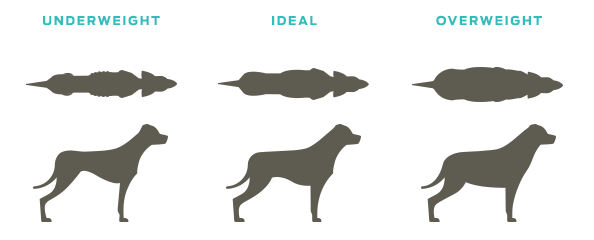 Is your dog the ideal weight, weight infographic