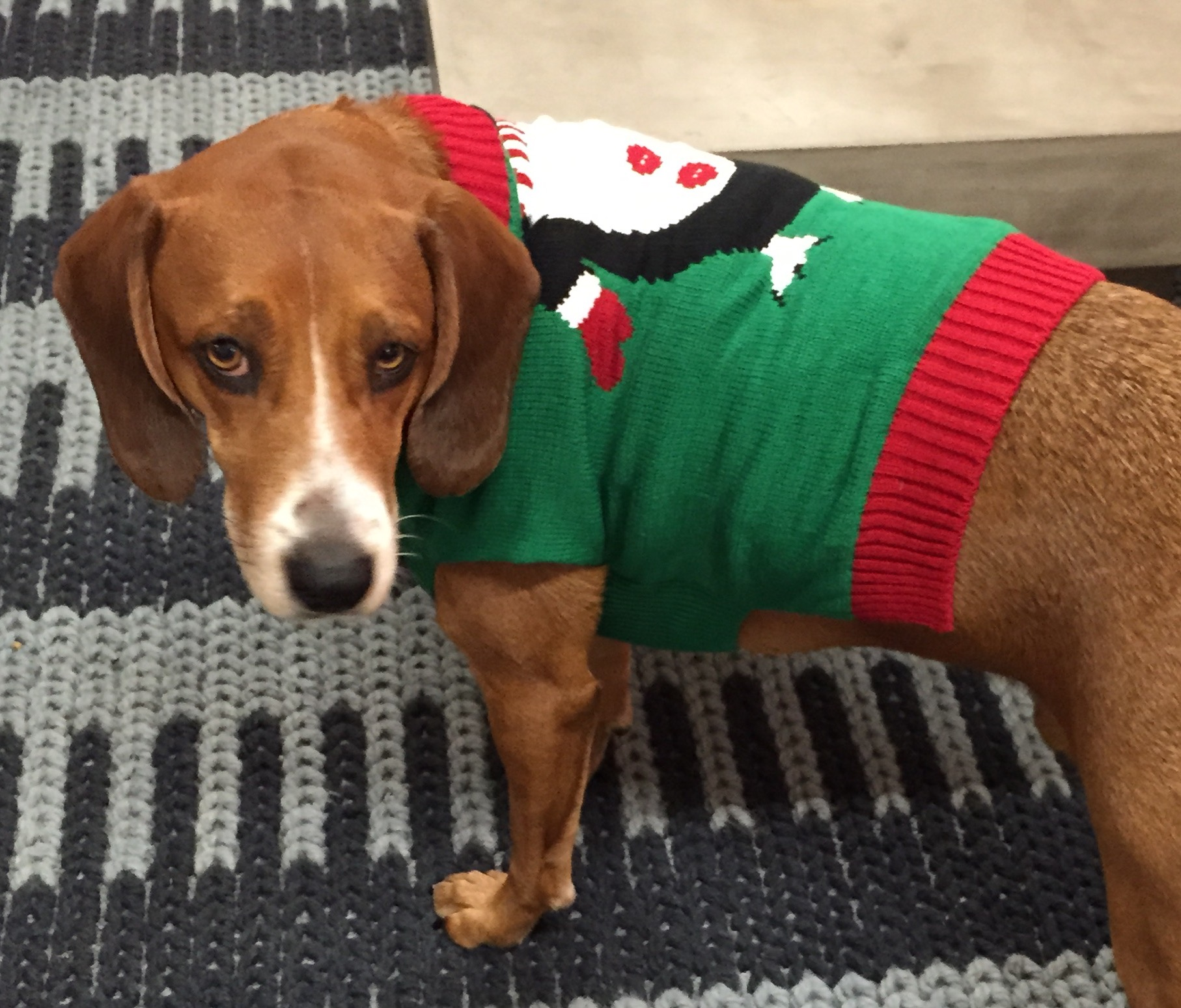Your Dog, His Sweater, and that Disappointed Look on His Face