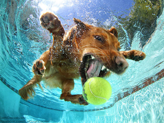 Ricochet the surfing therapy dog playing in pool