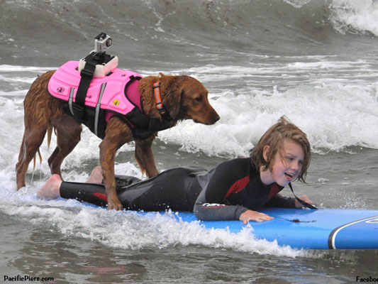 Ricochet the surfing therapy dog surfing with a friend