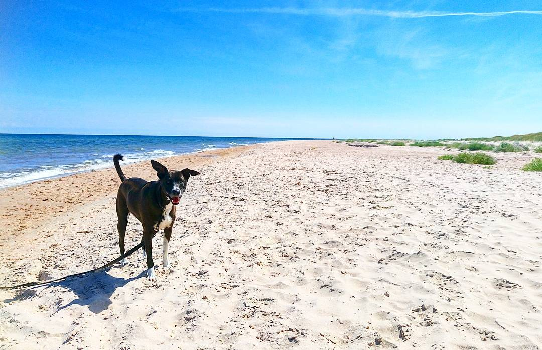 Ask a Trainer: How Can I Get My Dog to Chill Out at the Beach?
