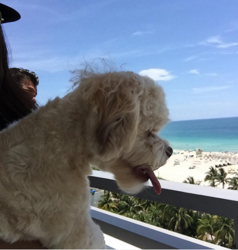 dog-friendly vacations Loews Miami Beach