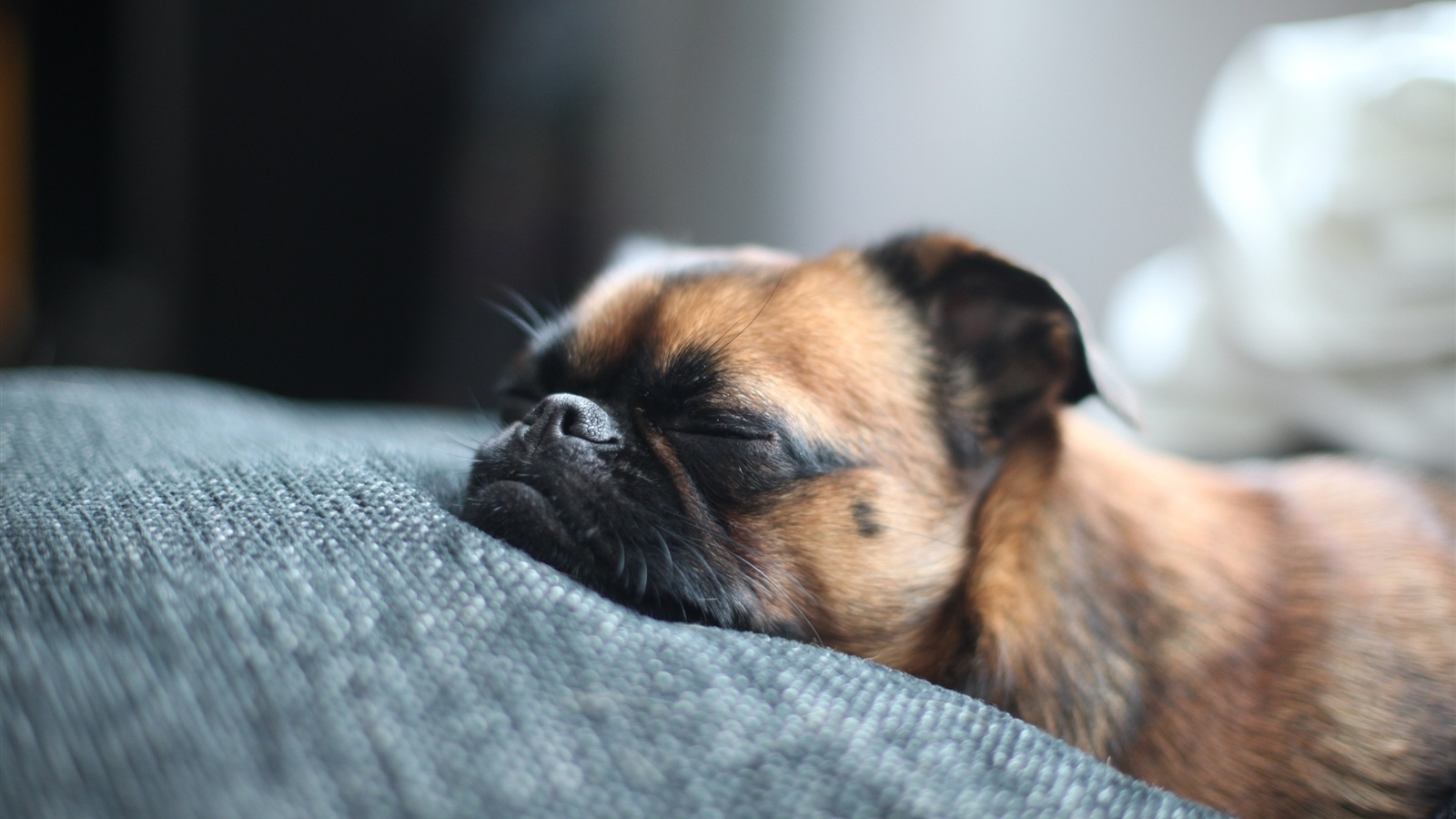 Ask a Trainer: How Can I Get My Dog to Sleep Through the Night?