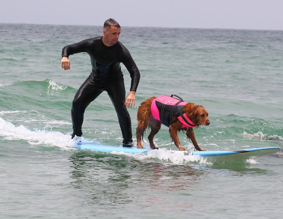 Meet the Surfing Therapy Dog Who's Making a Big Splash