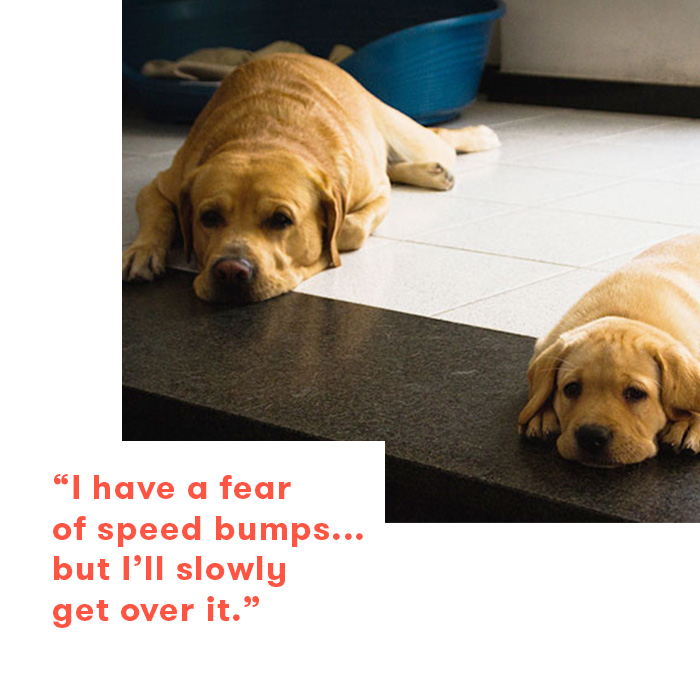 Dad jokes as told by dogs, labs