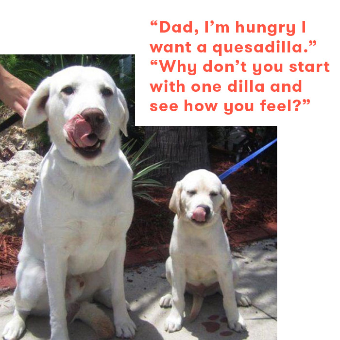 Dad jokes as told by dogs, dad and puppy