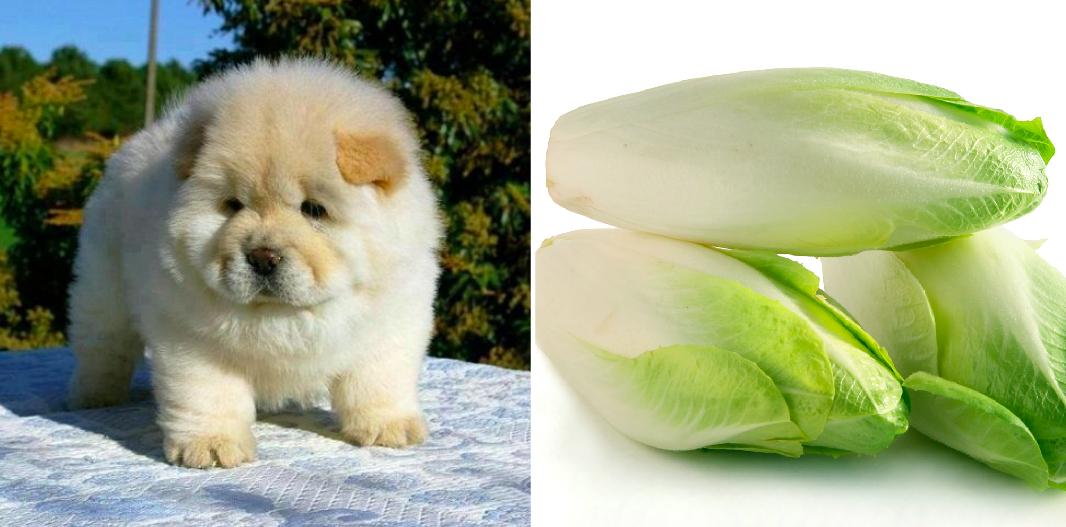 puppy names from produce, endive