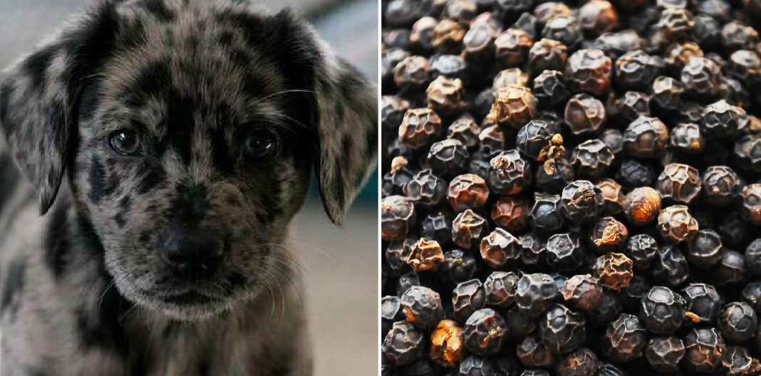 puppy names from produce, peppercorn