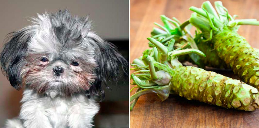 puppy names from produce, wasabi