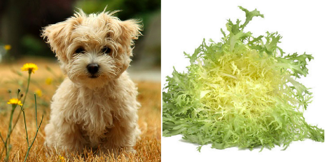 puppy names from produce, frisee