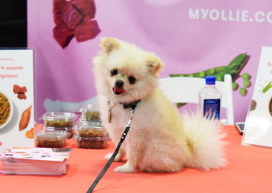The 5 Most Awesome Dogs We Met at the New York Pet Expo