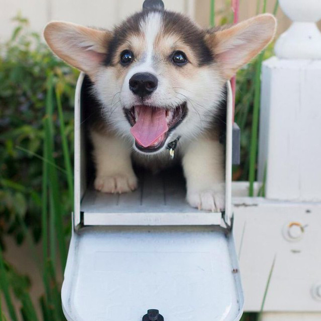 The Real Reason Your Dog Freaks Out At Delivery People, And How You Can Fix It