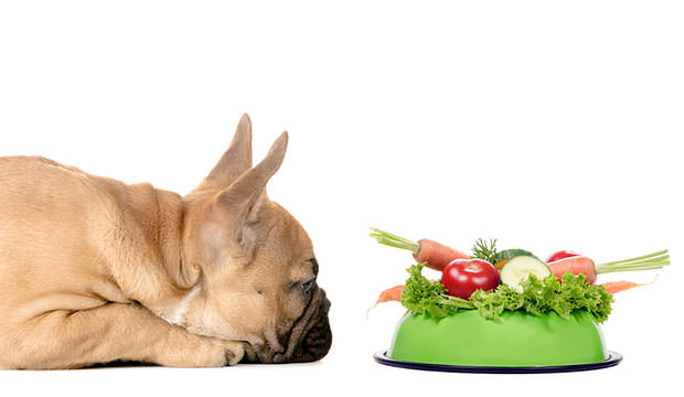 Should Your Dog Be Vegetarian?