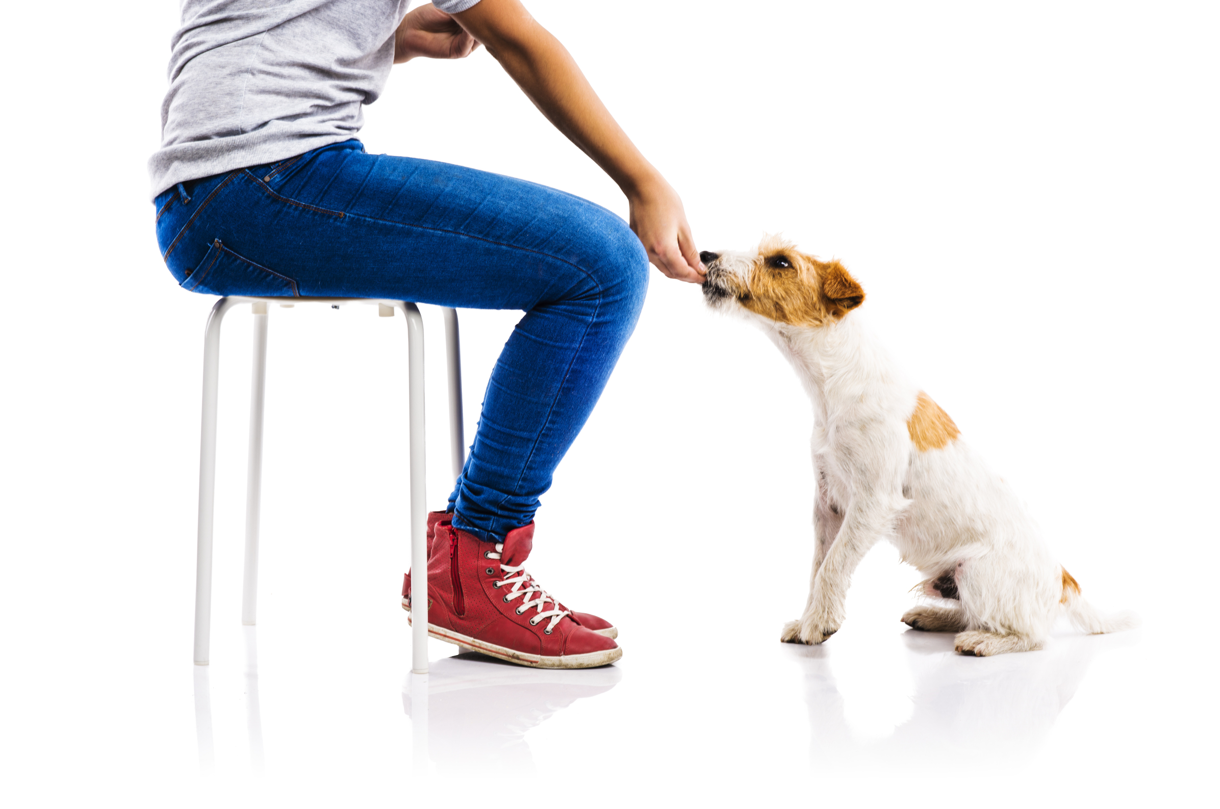 Dog Training Mistakes to Stop Making Right Now