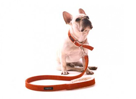 impressive dog leashes, warm and fuzzy