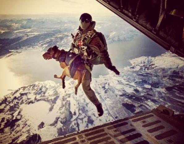 Military working dogs, jumping out of a plane