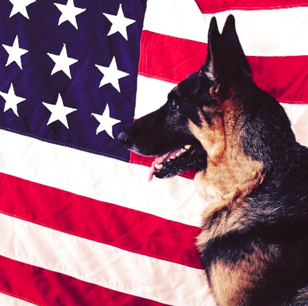 Meet the Bravest Dogs on Instagram