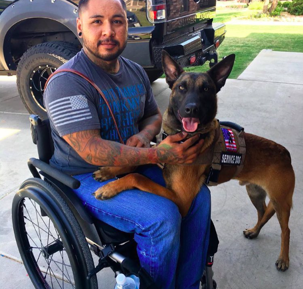 Military workind dogs, dog working with veteran