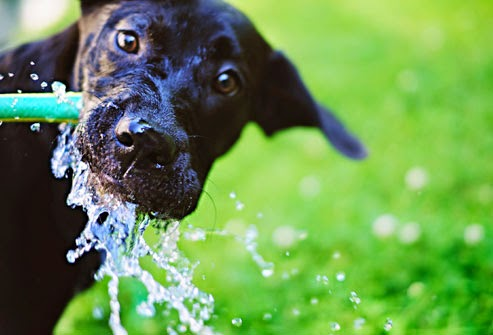 Genius Tricks to Keep Your Dog Cool This Summer