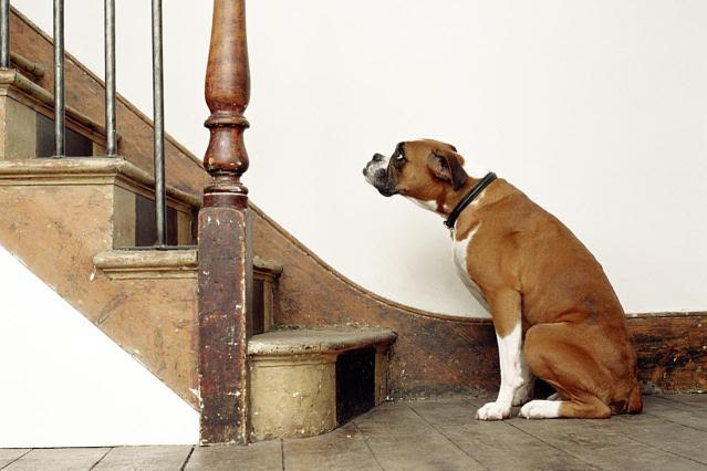 How Can I Help My Dog Overcome His Fear of Stairs?
