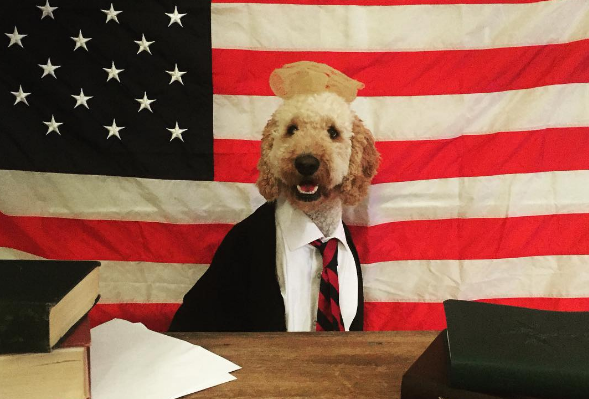 8 Dogs You Should Totally Vote for on Election Day