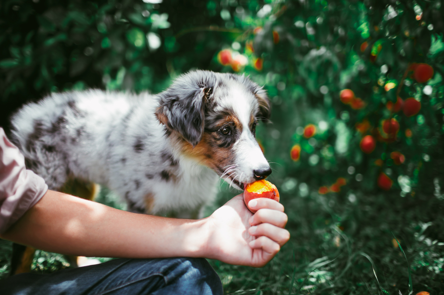 6 Research-Backed Health Benefits of a Natural, Fresh Diet for Dogs