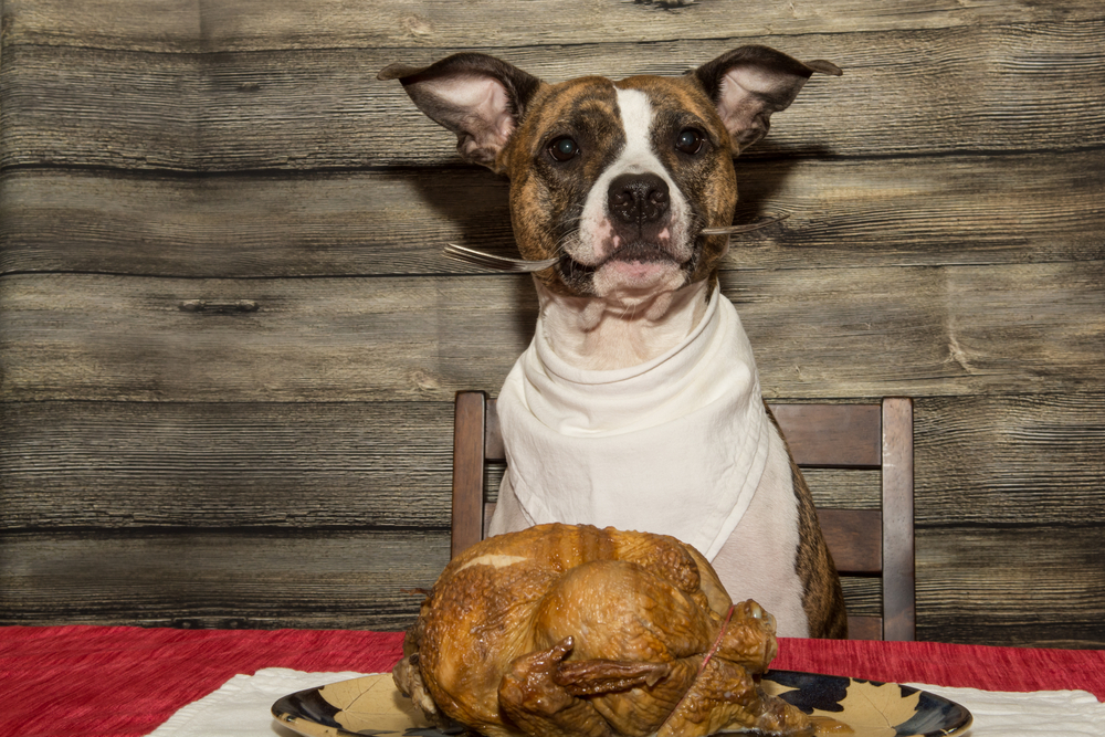 A Healthy Thanksgiving Feast for Your Pup