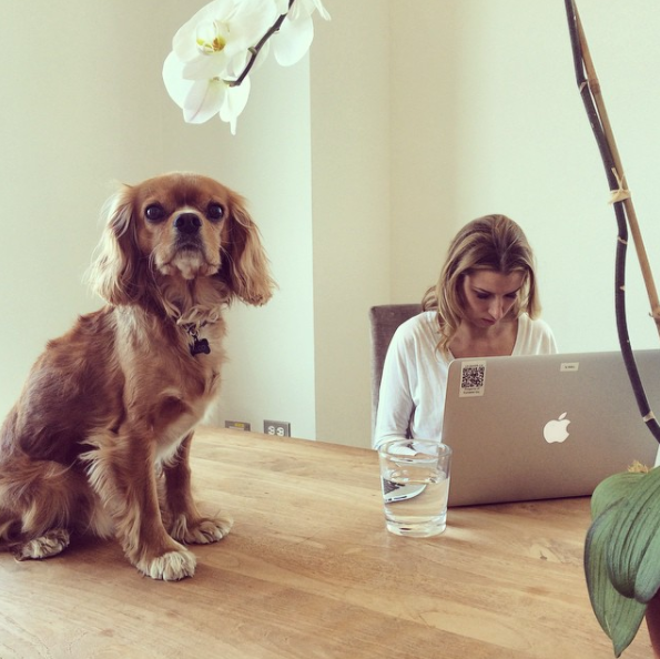 Dog-friendly offices Vensette
