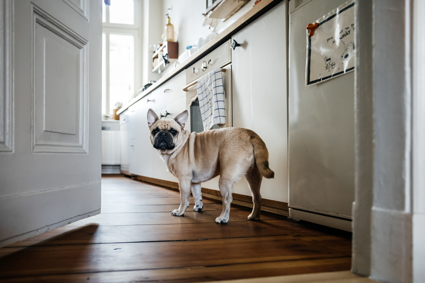 Common Mistakes Humans Make Cooking Dog Food